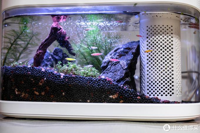 我的养鱼日记,花费700元打造一个智能生态鱼缸,画法几何C180智能喂养套装使用体验