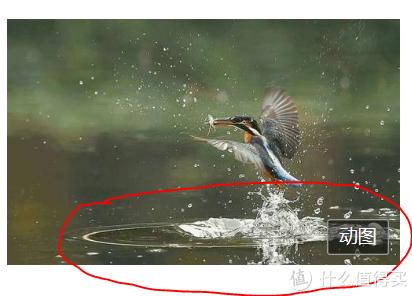 摄影鄙视链的底端——打鸟