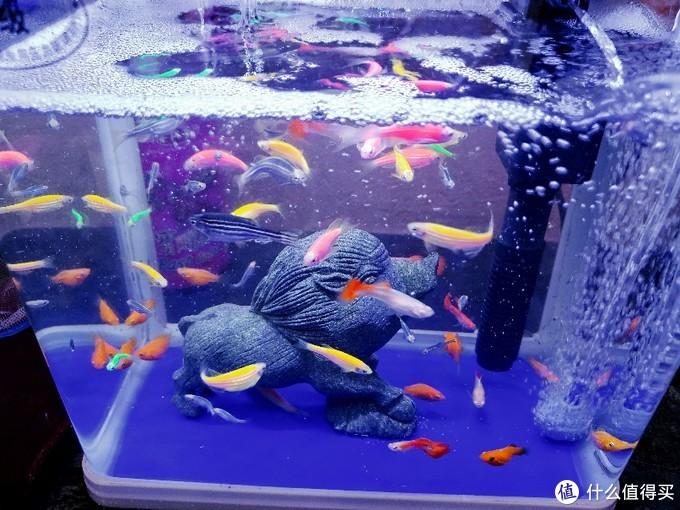 双十一拼多多花了130元给鱼儿换个大大的家承影水族箱XL-520 开箱