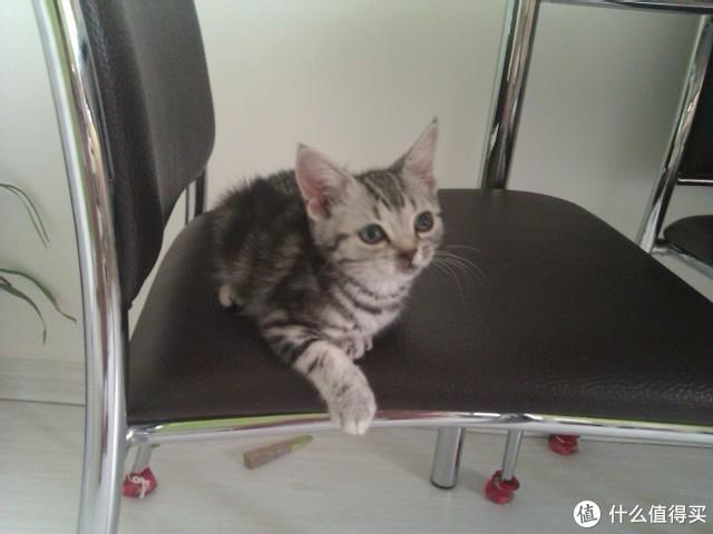 我可能是值得买唯一得过猫癣的人类值友,说下我们是怎么治好猫癣的
