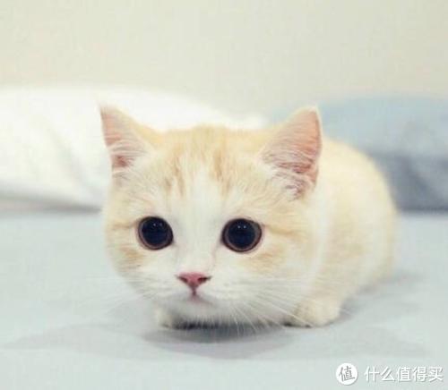 被问爆的猫粮口碑榜,不负众望地来了!