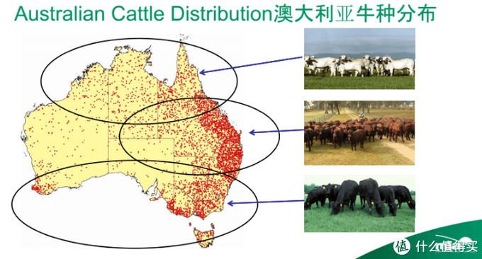 网购原切牛排牛肉知识——澳洲牛肉篇