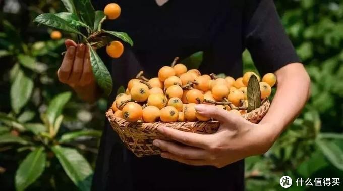 蒙自枇杷:走过一整年时光,饱饮四季,在冬天倔强成熟
