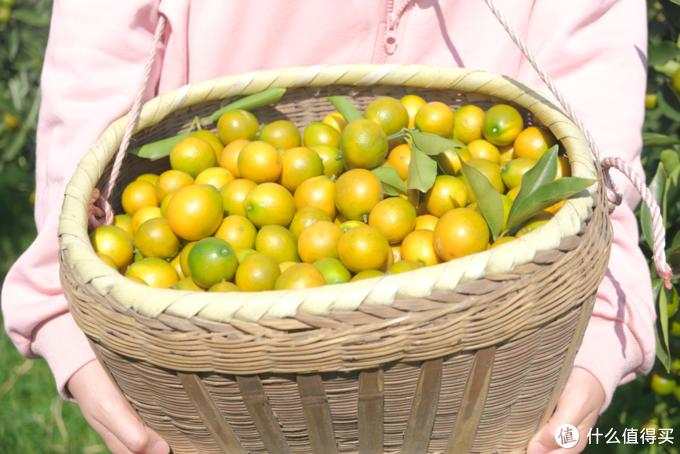 滑皮金桔:重新定义金桔,意料之外的甜蜜