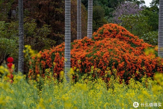 春夏秋冬又一春·广州白云山