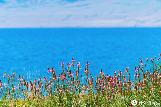 赛里木湖畔