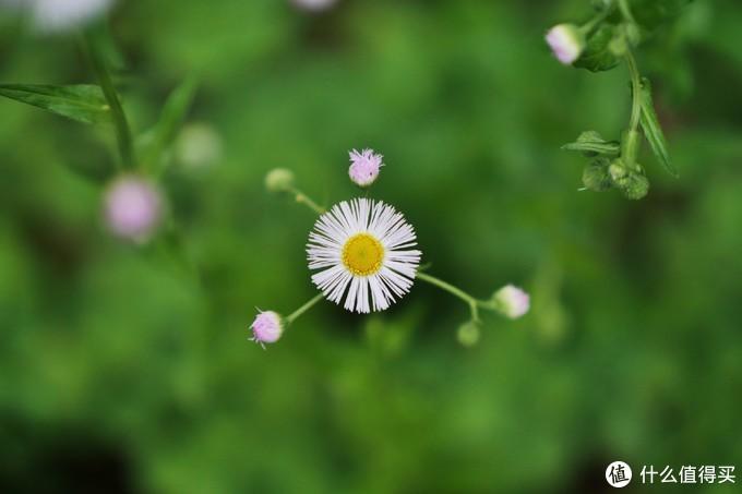 初春的姚江公园