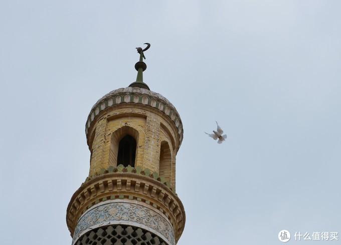 喀什艾提尕尔广场上的鸽子