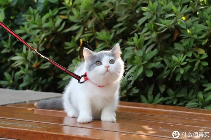 国产三大安全的猫粮是哪几个牌子?不输外国大牌的国货之光