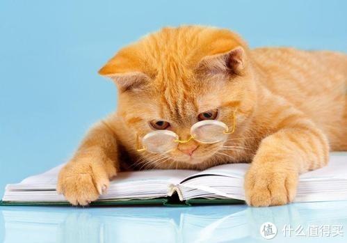 猫咪奶粉的常识,你了解吗?