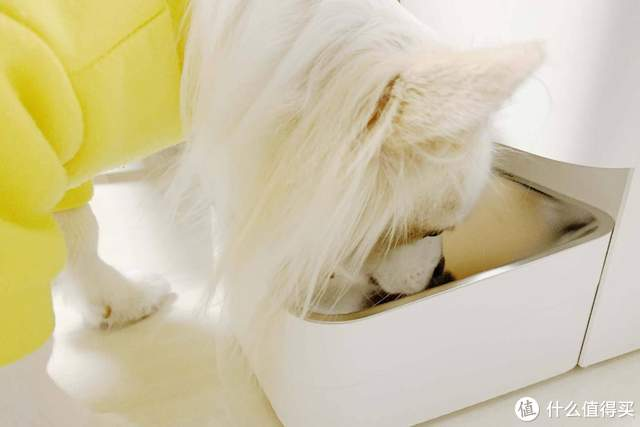 小米米家智能宠物喂食器开箱体验:定时定量喂食,断电断网也不怕