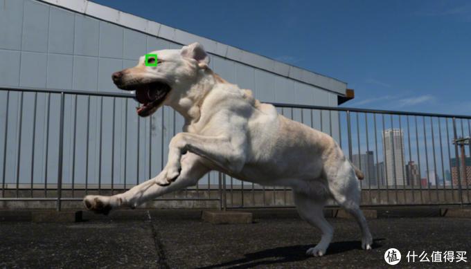 索尼Xperia 1 II获最佳拍照手机奖,索粉:意料之中