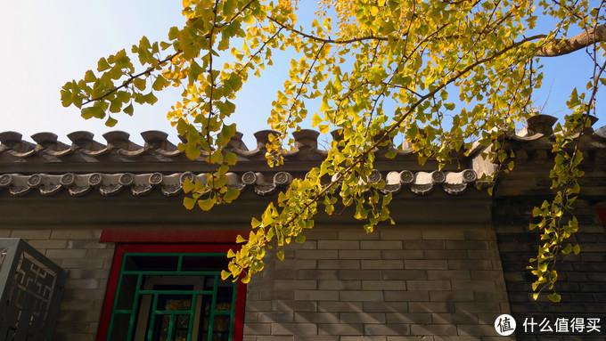 寻找北京的秋天&秋日长膘记|附北京公共交通攻略