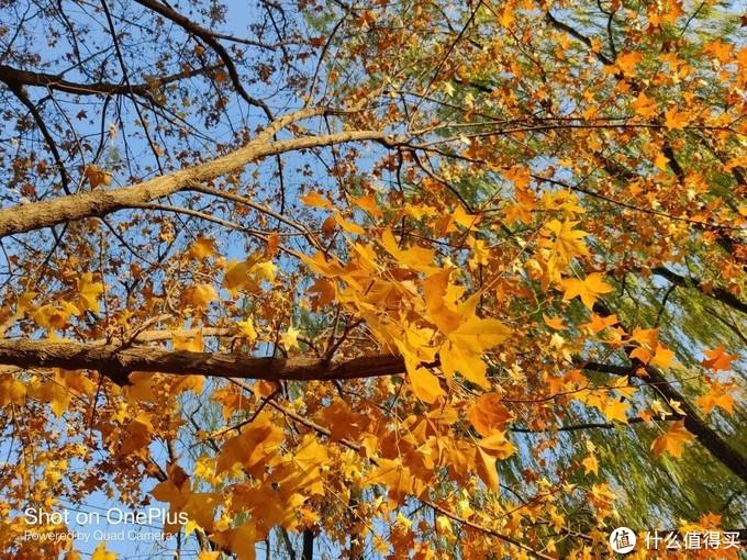 OnePlus 8T体验报告:秋色渐晚,轻快出发