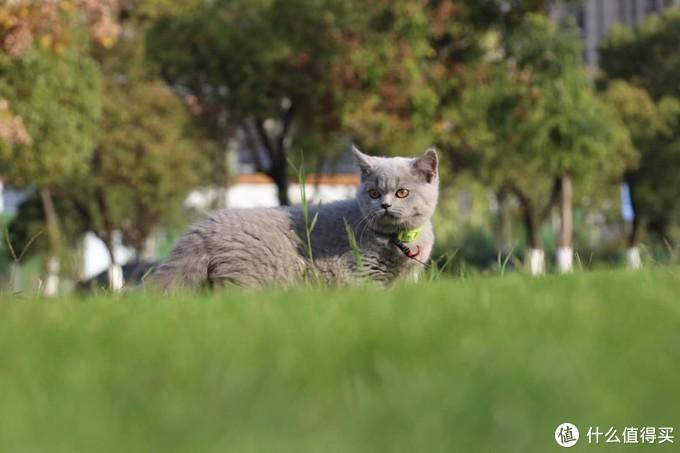平价质量口碑较好的猫粮有哪些推荐呢?