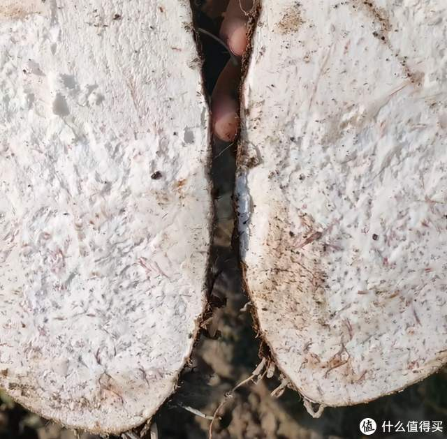 实地考察福鼎槟榔芋后,才发现槟榔芋有多好吃!