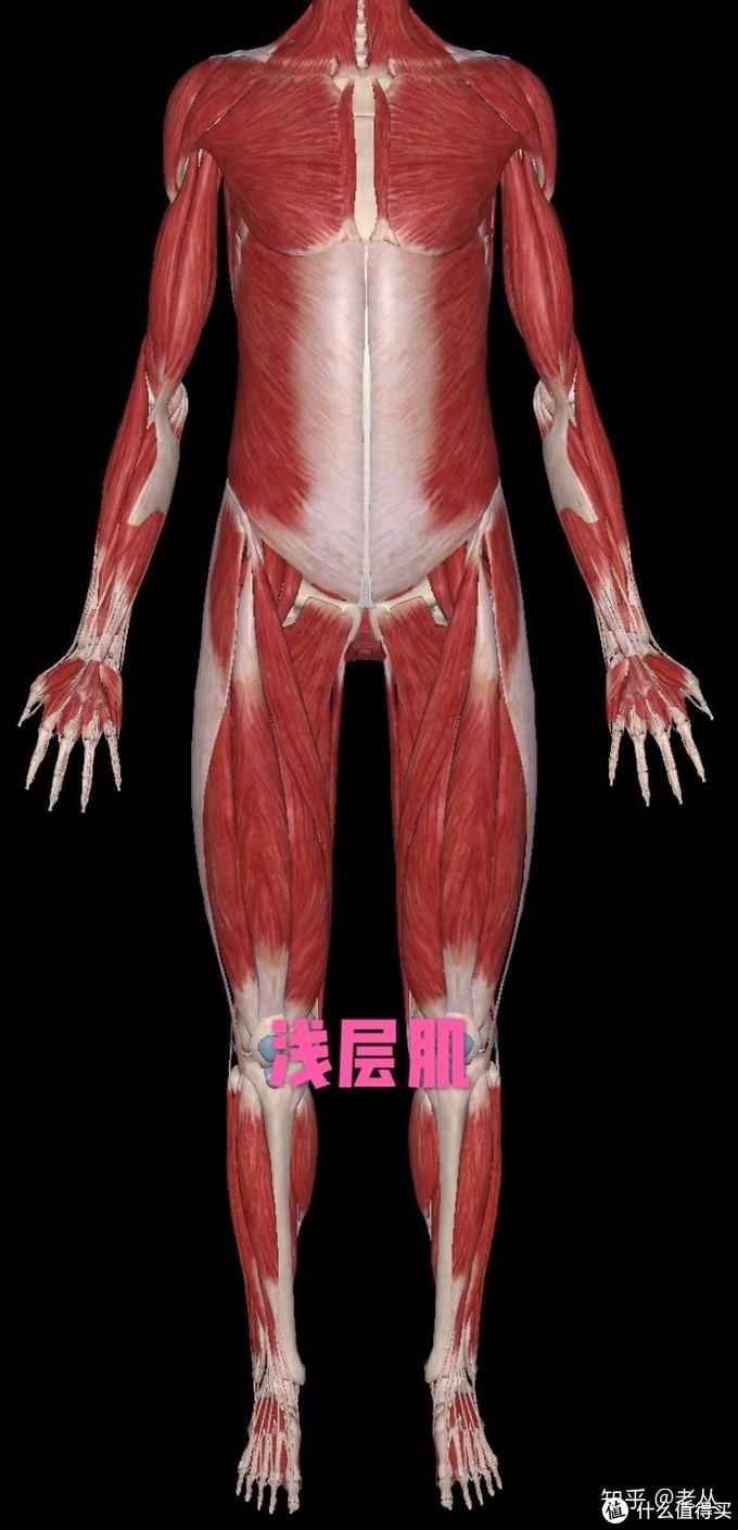 """避免运动损伤的关键:深层肌训练 内附3大必练""""深层肌群""""训练计划"""