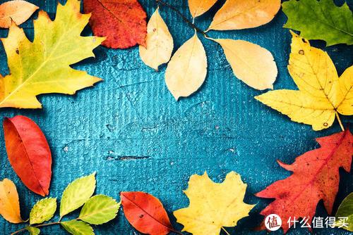 幼儿园秋冬作业必选——树叶粘画,你陪孩子做了吗