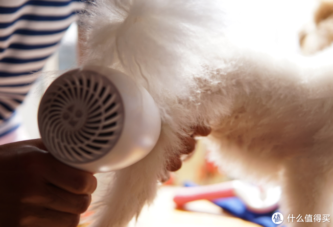 小七的新吹风,嗷喵喵智能降噪宠物吹风机体验