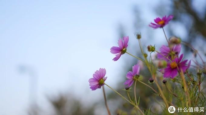 这种小花随处可见