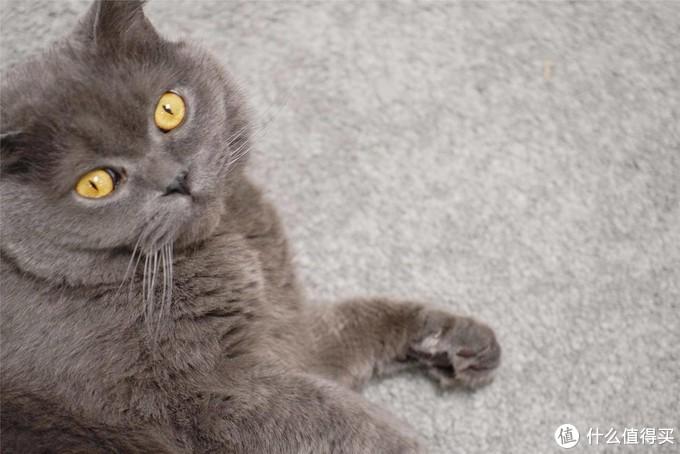 喵星人的主粮如何选择?铲屎官告诉你什么样的猫粮才更好