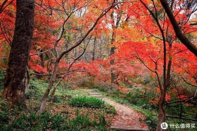 去初冬的栖霞山,寻觅所剩无几的最后秋色
