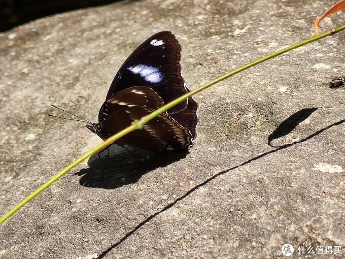 晒太阳的蝴蝶