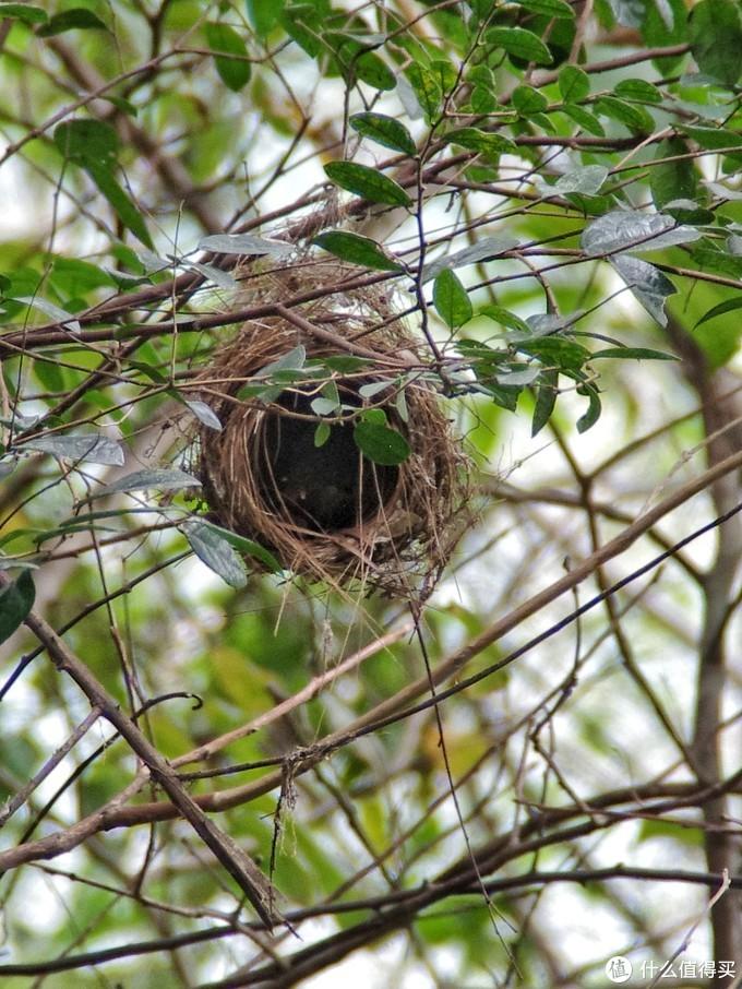 鸟巢里依稀可以看见雏鸟