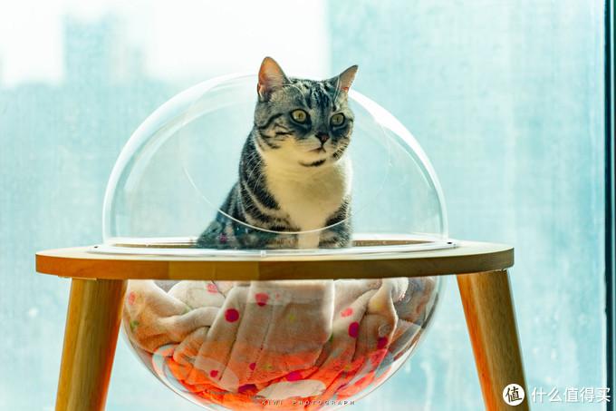 一日吸猫,终身复吸。来给主子做个太空舱小窝吧