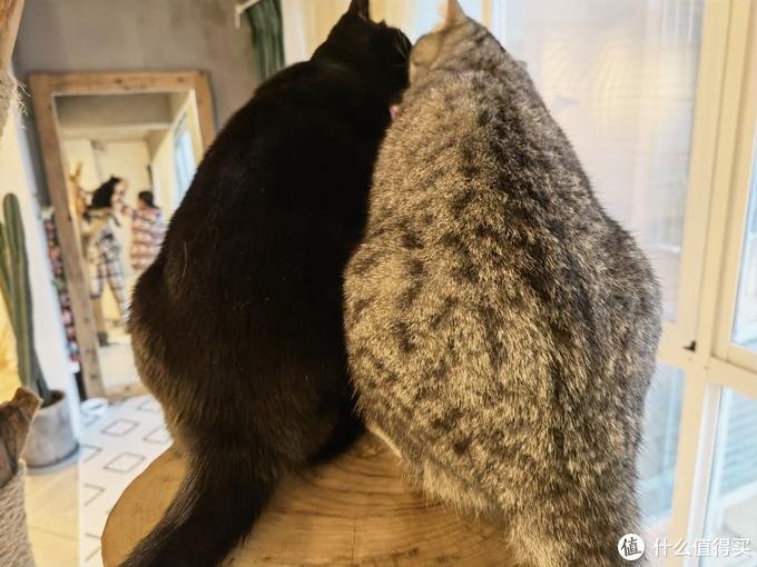 看这两个大胖屁股