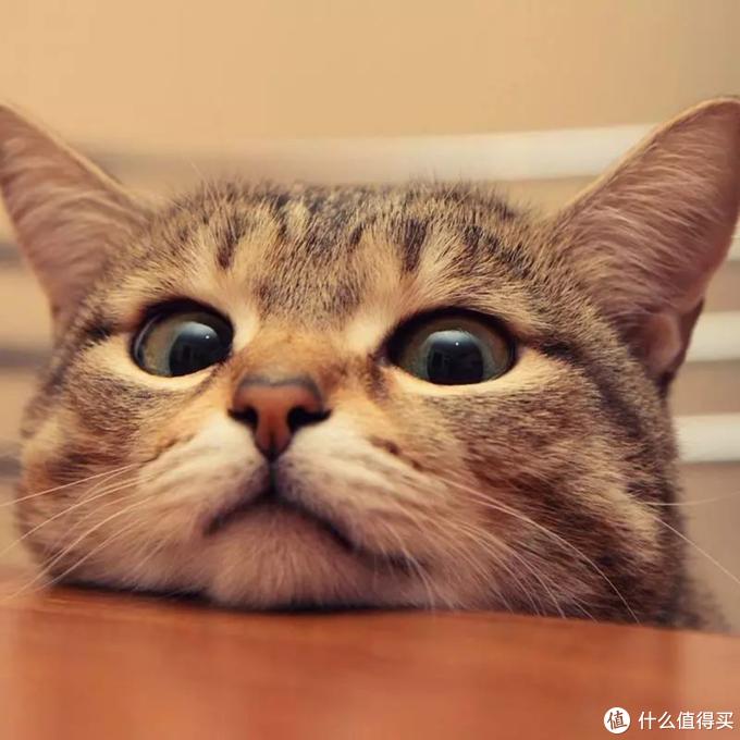 猫咪化毛球片的化毛效果怎么样