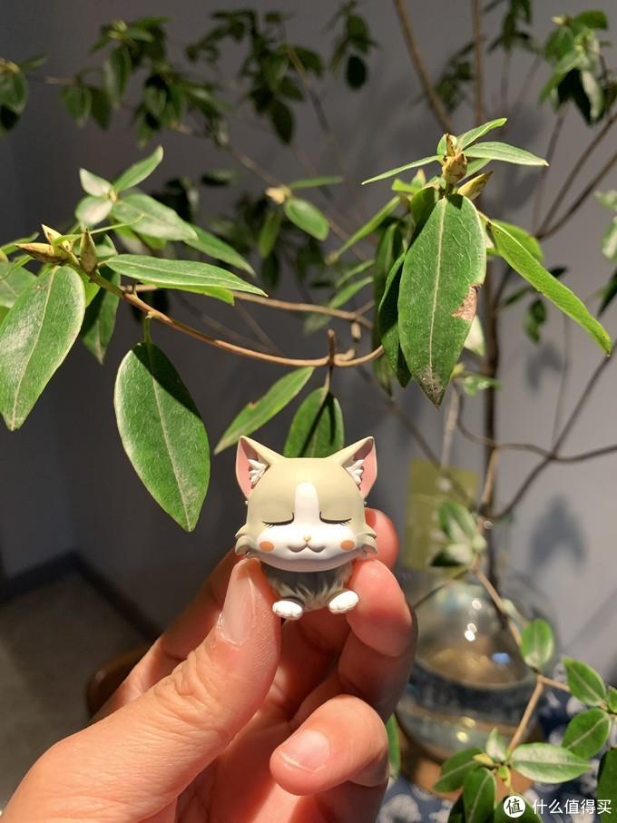 这个黄油猫也太可爱了吧,这个蓝牙音箱竟让撸猫人士爱不释手