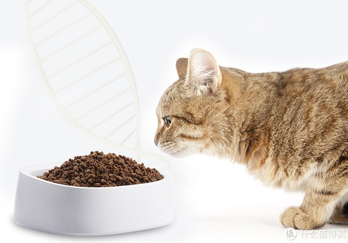 新手养猫, 怎么才能选好猫粮?双十二推荐十款猫粮囤货