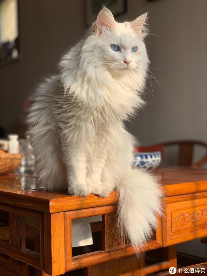 乐歌E5电动升降桌开箱,顺便晒猫