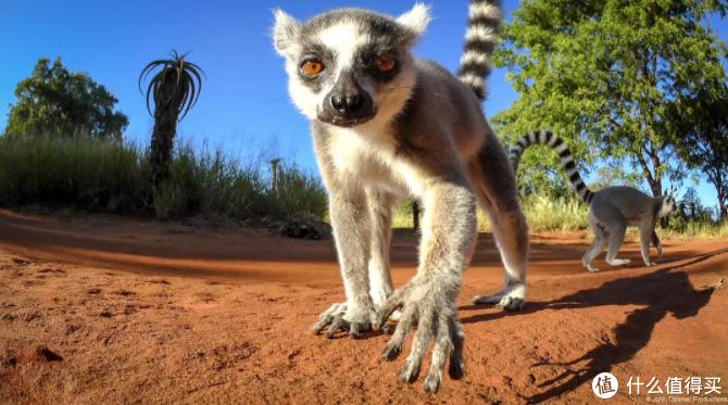 绝美!震撼!盘点2020年最值得看的9部高分自然纪录片 畅享视觉盛宴(附观看链接)