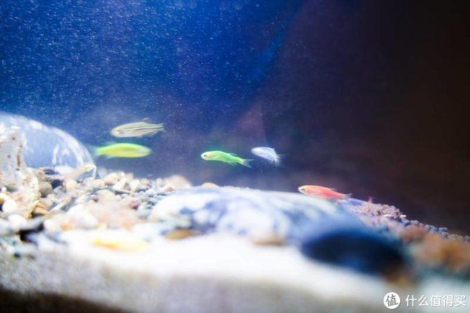 在家创造水世界:小佩起源纪鱼缸评测