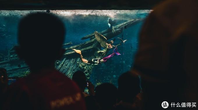 我也在看鱼,不过是看人鱼。EOS R