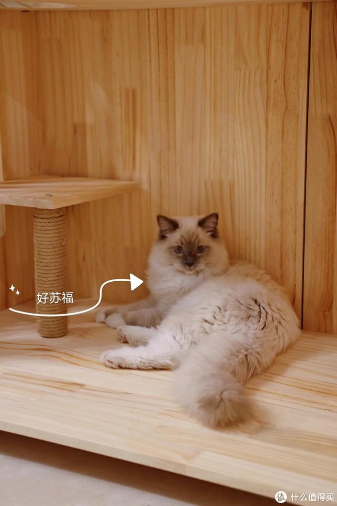 年货节来了, 喵主子的粮要囤起来了,中端价位猫粮推荐