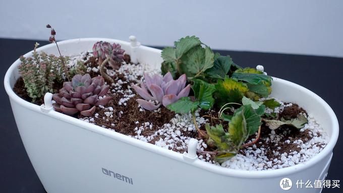 全生命周期呵护植物茁壮生长的种植伴侣