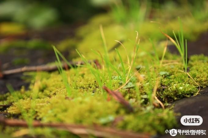 城墙上的苔藓和草