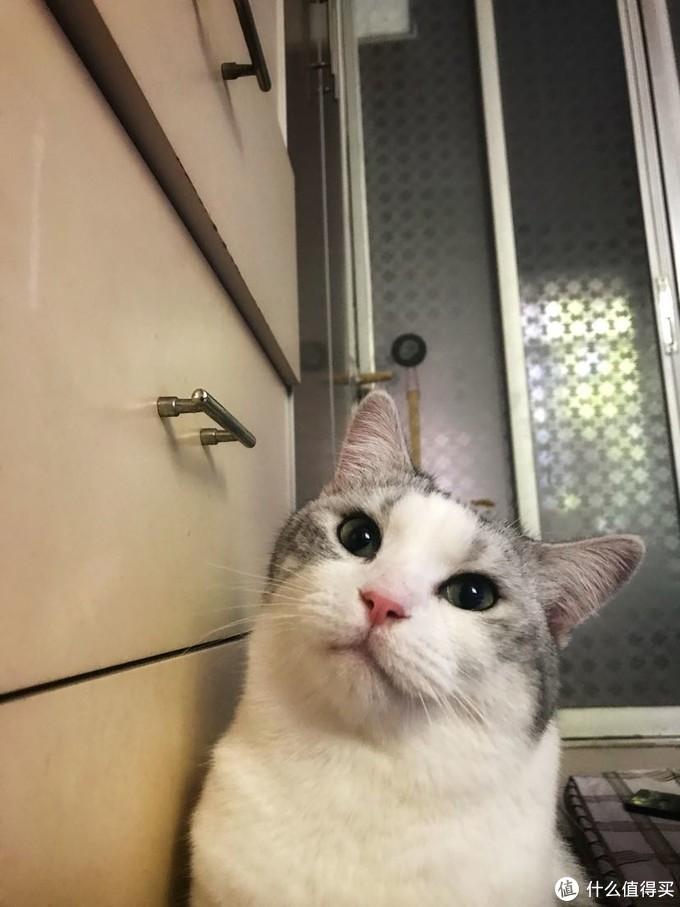 怎样让猫咪多喝水及低成本搭配猫咪饮水装置