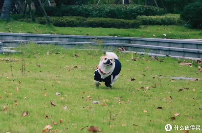 养一只小土狗是种怎么样的体验!
