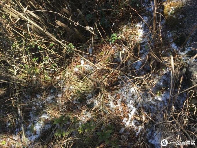 路边草丛有些冰渣