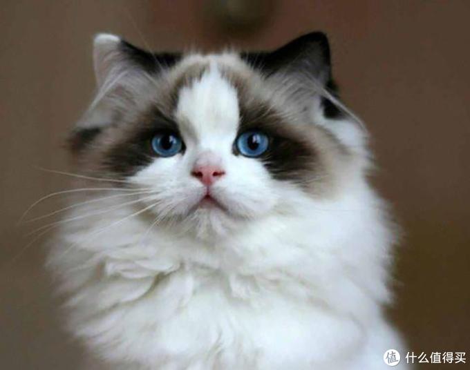 猫咪吐毛不用愁,化毛球片重磅来袭