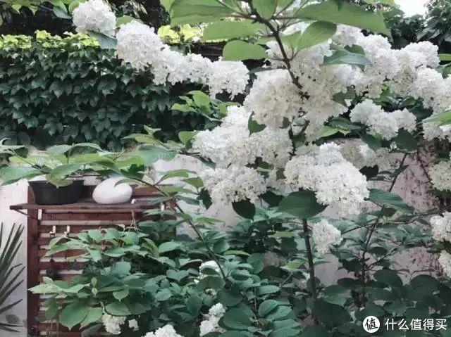 他花2年,改造上海61㎡的老公房,完工后,20㎡后花园太美了