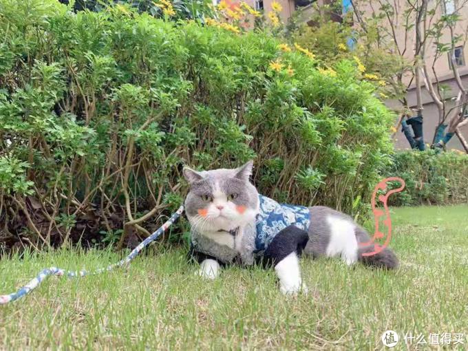 纯干货!养猫经验分享:送给初次养猫的朋友
