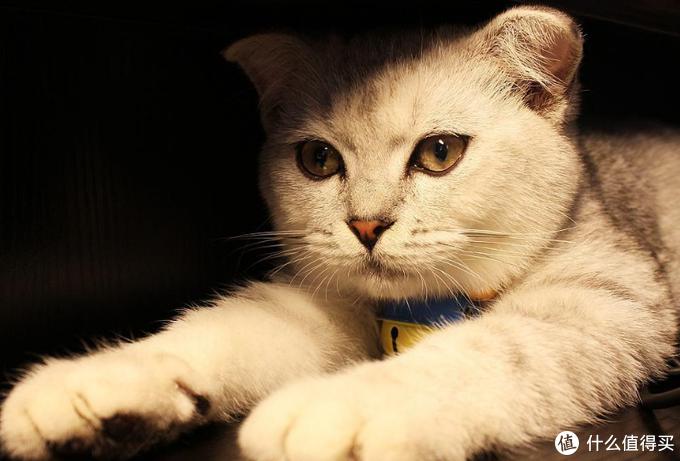 猫咪毛球症的表现与治疗、预防