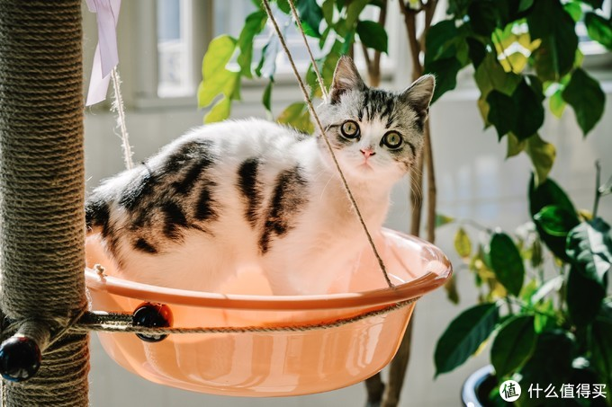 抓拍一下家里的小喵咪