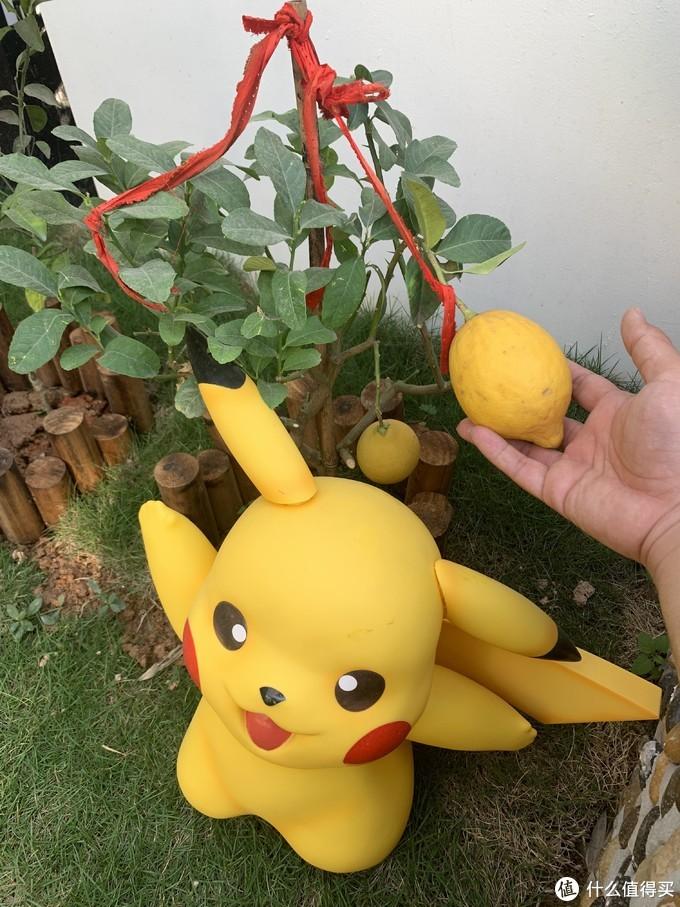 柠檬挺好的