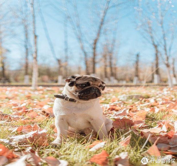狗狗钙片有哪些功效?狗狗补钙很重要